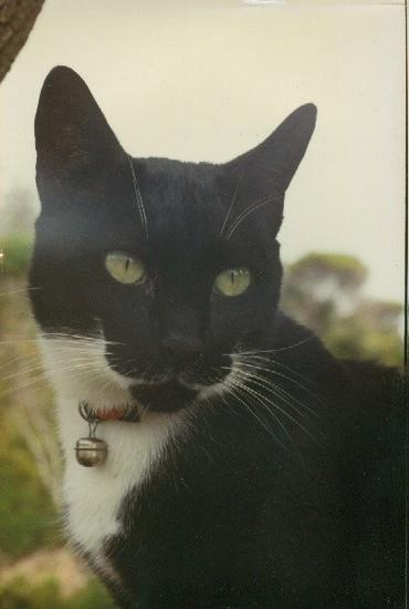 Jack, the worlds' best cat ...vale