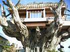 THE ULTIMATE TREE HOUSE!
