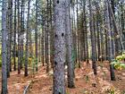 wisconsin forest 2.bmp