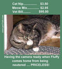 priceless-picture-cat-giving-finger-funny-Mastercard-parody.jpg