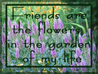 Friends are the Flowers in the Garden of My Life