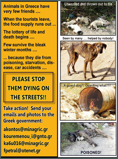 Stand up for the Greek strays