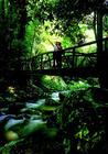 Bridge In The Rainforest.jpg