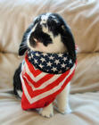 Red White & Blue Bunny
