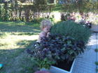 sniffing the herbs 020.jpg