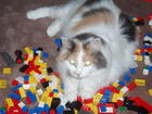 Ali loves leggo...