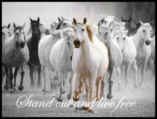 Stand Out and Live Free