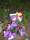 pet cemetery, 23-year-old cat