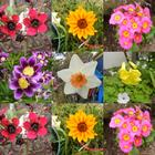 Collage of flower closeups