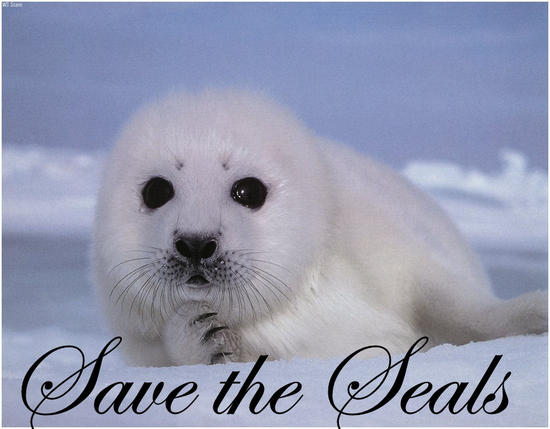 baby seal_Save the Seals1.jpg