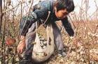 Child Picking Cotton © EJF