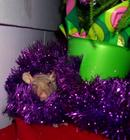 Holiday Rat