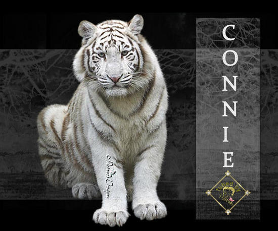 white tiger_Connie.jpg