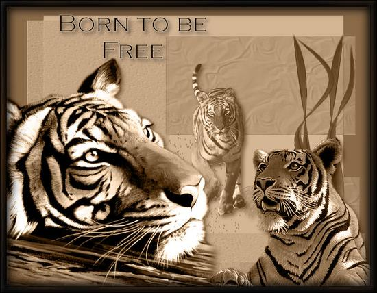 born to be free.bmp