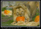 It's My Pumpkin And You Can't Have It