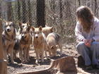 me and the wolves