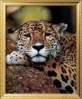 Jaguar Portrait.