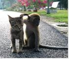 Cat and Monkey