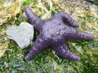 I love starfish