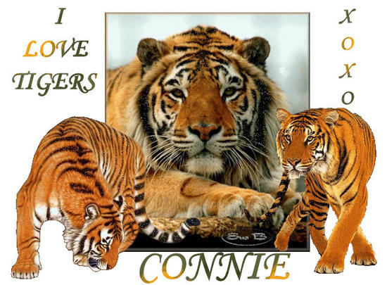 TIGERS_Connie3.jpg