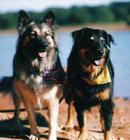 Missy & Daisy at the lake 10-2001