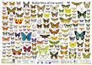 butterflies of the world.jpg