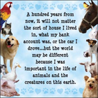 Animals in my life.