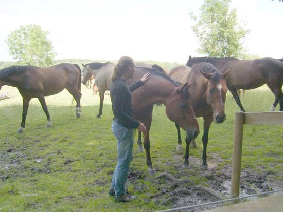 Me and Horses (2008)