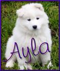 Ayla at 7 weeks old