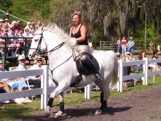 Lipizzan Stallion, Myakka City
