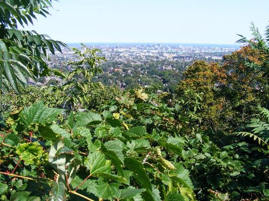View from the escarpment.jpg