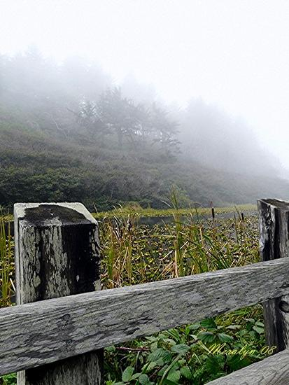 Old Mill Pond and Fence in the fog