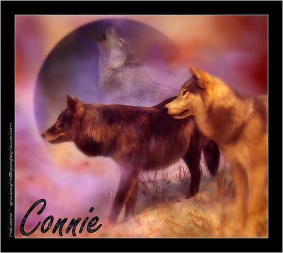 wolves_Connie_004.jpg