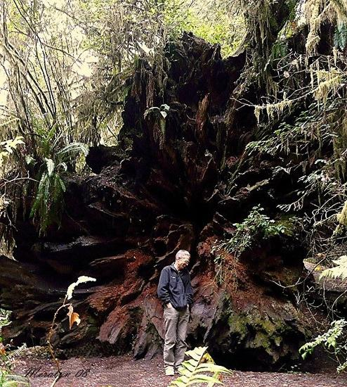 Harry in front of a Fallen Giant's Roots
