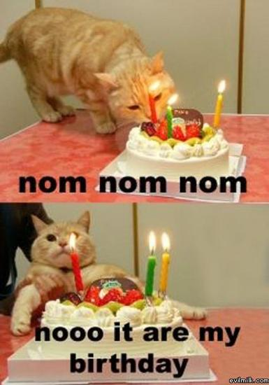 G Birthday cat