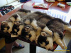 cute-little-puppies-row-img118.jpg