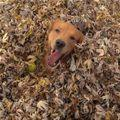 Dog_In_The_Fall_s.jpg
