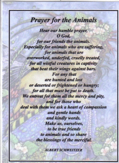 Prayer for the animals.