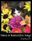 have_a_beautiful_day_kitten_photo_001.jpg