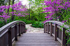 Bridge to Springtime