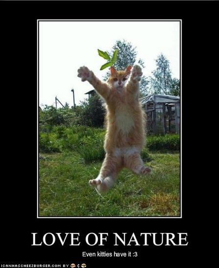 cat loves nature