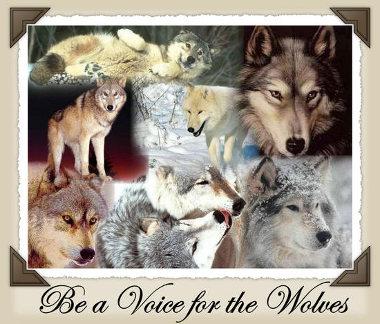 WolvesCollage_AutoCollage_7_Images_Group3.jpg