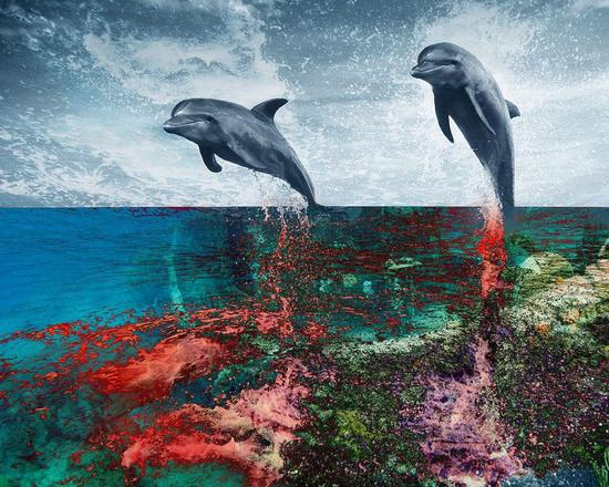 color dolphins