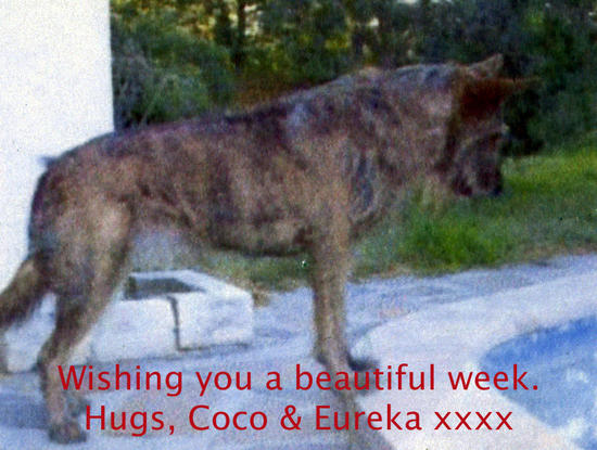 Coco care2 beautiful week.jpg