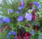 container garden - periwinkle