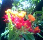 Flowers - bright red, orange & yellow