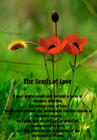 seeds of love.jpg