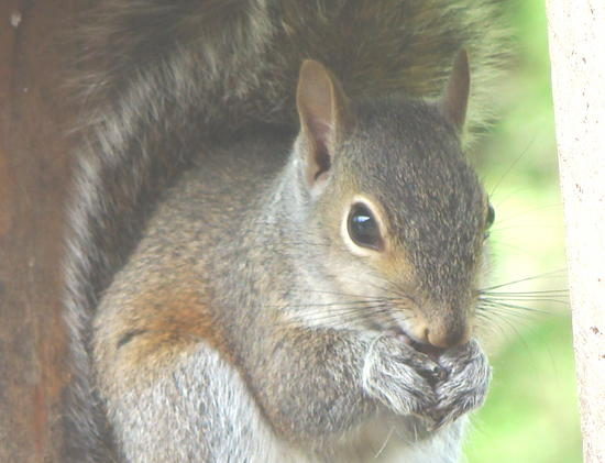 young squirrel 3.jpg
