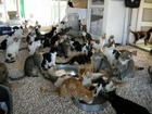 we re the lucky ones, Rescued Cats, Paphos Animal Rescue houses over 200 cats, indoor or outdoor, you just choose