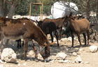 Donkey/Horse Shelter, Paphos Animal Rescue, the Islands largest Rescue